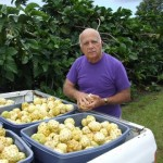 Uncle Herbert With Freshly Picked Noni Fruit