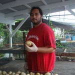 Employee With Ripe Noni Fruit